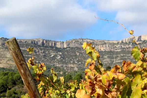 ¿Os apuntáis a conocer un poco más cuáles son las principales variedades de uva con que se producen los vinos de las DO Montsant y DOQ Priorat?