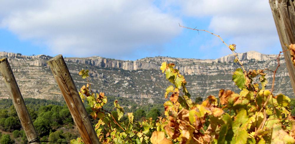 Us apunteu a conèixer una mica més quines són les principals varietats de raïm amb que es produeixen els vins de les DO Montsant i DOQ Priorat?